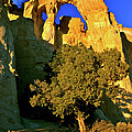 Grosvenor Arch At Sunset by Ed  Riche