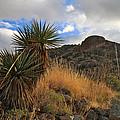 Grosvenor Hill Arizona by Ed  Riche