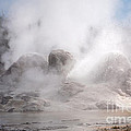 Grotto Geyser In Upper Geyser Basin In Yellowstone National Park by Fred Stearns