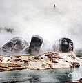 Grotto Geyser Yellowstone National Park by NPS Photo Detroit Photographic Co