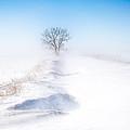 Ground Blizzard by David Wynia