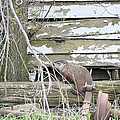 Ground Hog Day by Bonfire Photography