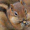 Ground Squirrel by Heather Coen