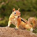 Ground Squirrel by Kelly Black