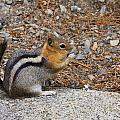 Ground Squirrel by Melinda Fawver