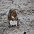 Ground Squirrel by Tara Potts