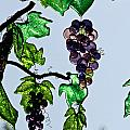 Growing Glass Grapes by Susan Herber