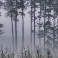 Growing In The Fog by Edgar Laureano