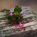 Growing Like Weeds by Sheryl Bergman