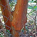 Growing Through The Fence by Aimee L Maher ALM GALLERY