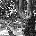 Growth On The Survivor Tree In Black And White by Rob Hans