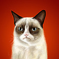 Grumpy Cat by Olga Shvartsur