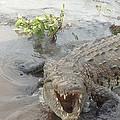 Grumpy Crocodile  by Lisa Piper