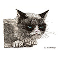Grumpy Pussy Cat by Jack Pumphrey