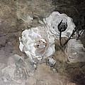 Grunge White Rose by Evie Carrier