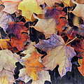 Grungy Autumn Leaves by Georgiana Romanovna