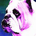 Grunt - Bulldog Pop Art By Sharon Cummings by Sharon Cummings