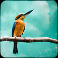 Guam Kingfisher - Exotic Birds by Gary Heller