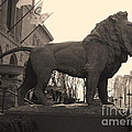 Guarded Lion Statue In Chicago by Minding My  Visions by Adri and Ray