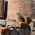 Guardian Of Hovenweep by Steve Brown