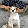 Guardian Of The Grapes by Barbie Corbett-Newmin