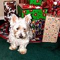 Guarding Christmas by Image Takers Photography LLC - Carol Haddon