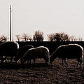 Guarding The Sheep by Lucy Stern-Duivenvoorden Photography