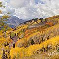 Guardsman Pass Aspen - Big Cottonwood Canyon - Utah by Gary Whitton