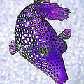 Guinea Fowl Puffer Fish In Purple by ABeautifulSky Photography by Bill Caldwell