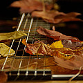 Guitar Autumn 2 by Mick Anderson