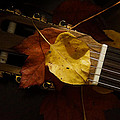 Guitar Autumn 4 by Mick Anderson