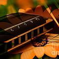 Guitar Dream by Marvin Blaine