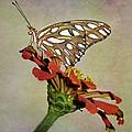 Gulf Fritillary Butterfly by David and Carol Kelly