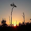 Gulf Shores Sunset by Leara Nicole Morris-Clark