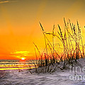 Gulf Sunset by Marvin Spates