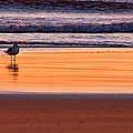 Gull And Sunrise Surf by Jeff Sinon