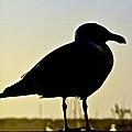 Gull At Sunset by Bill Owen