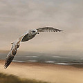 Gull At The Shore by Jai Johnson
