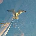 Gull Catching Popcorn by Susan Wyman