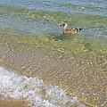 Gull Floating by Ellen Paull