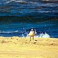 Gull Goer by Art Dingo