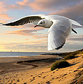 Gull On The Wing Over Beach Landscape by Elaine Plesser