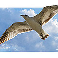 Gull - Out Of Bounds by Brian Wallace