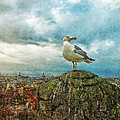 Gull Over Rome by Jack Zulli