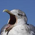 Gull by Stuart Litoff