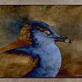 Gull by WB Johnston