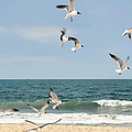 Gulls A Dance'n by Diana Angstadt