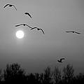 Gulls On The Vistula River by Tomasz Dziubinski