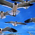 Gulls In Flight by Geoge Ranalli