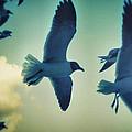 Gulls by Paulo Guimaraes